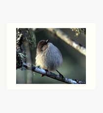 Bushtit Out for its Evening Meal Art Print