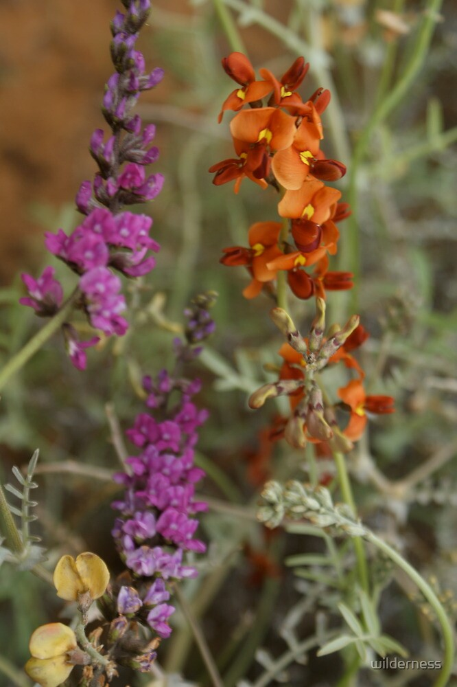 Wildflowers of the Outback by wilderness