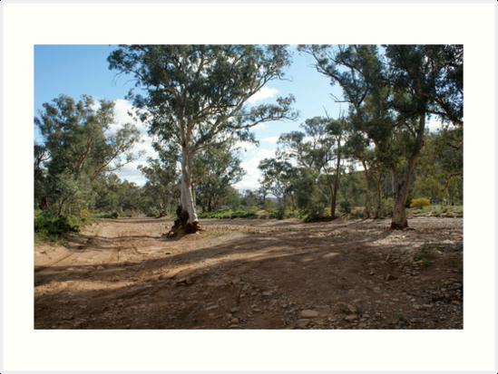 Flinders Ranges by wilderness