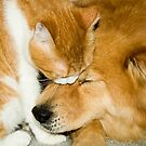 """""""Comforting Companions"""" cat and dog snuggling by ArtThatSmiles"""