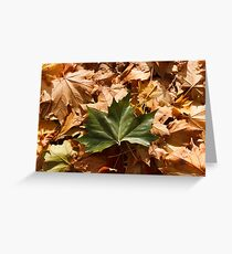 Fallen Maple Leaves Greeting Card