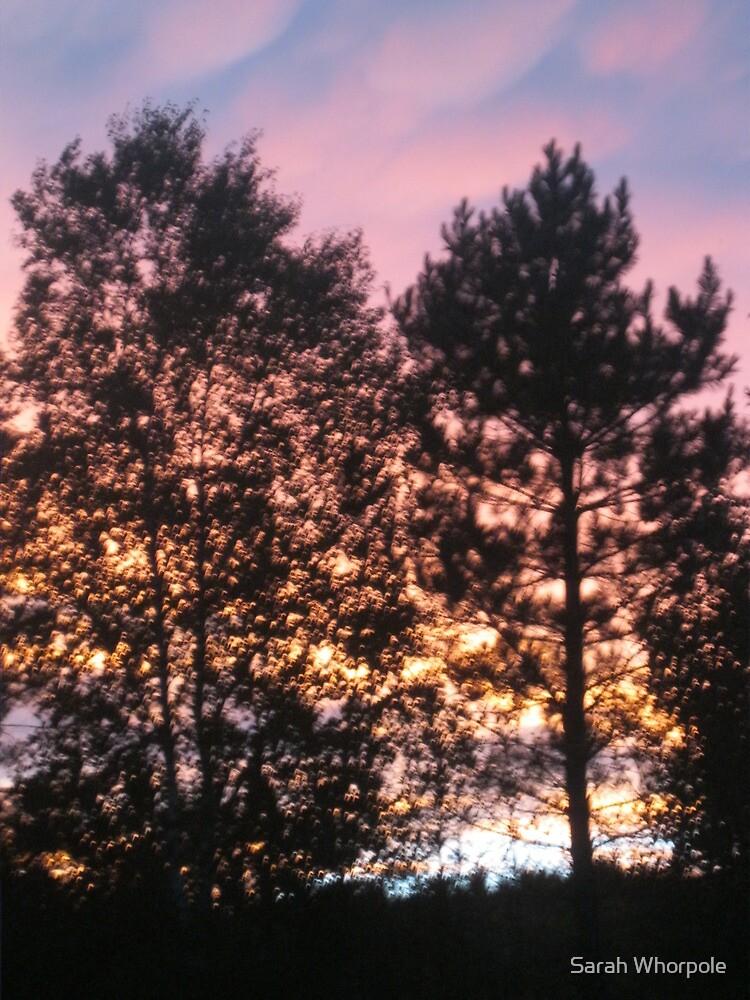 Shadowed Trees, Rainbow Sky by Sarah Whorpole