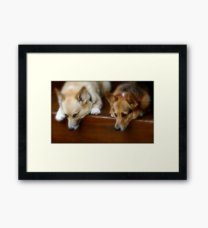 Two Pooped To Participate Framed Print