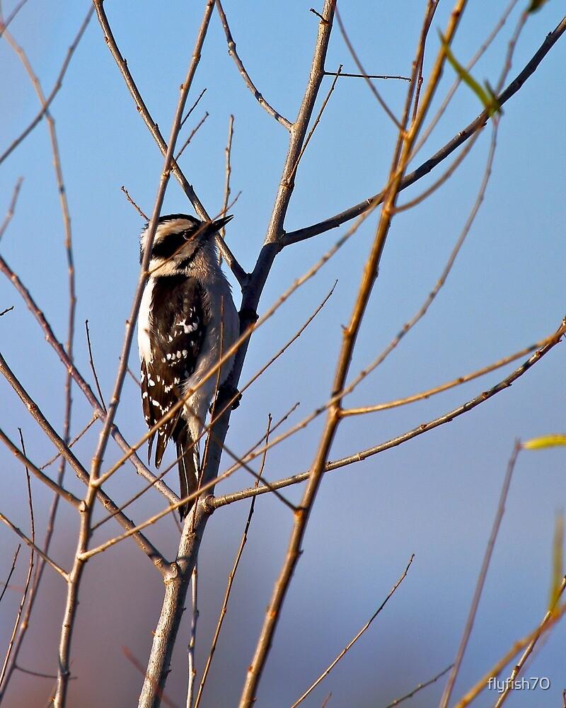 Downy Woodpecker by flyfish70