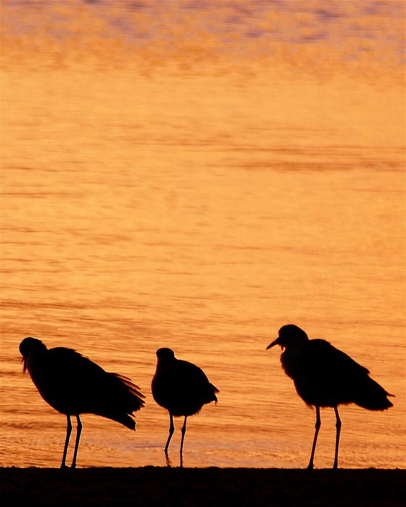 sunset birds 1 by gary kurzer