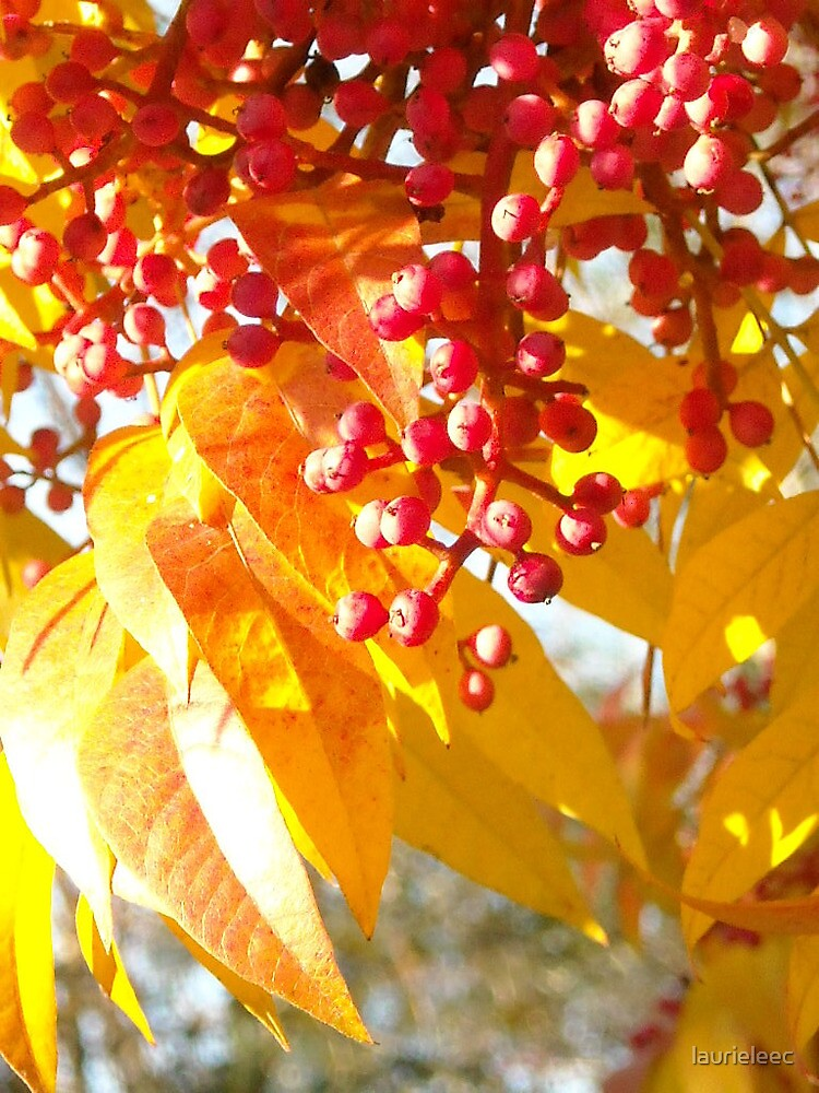 Autumn Color by laurieleec