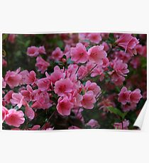 Pink Flowers, nature Poster
