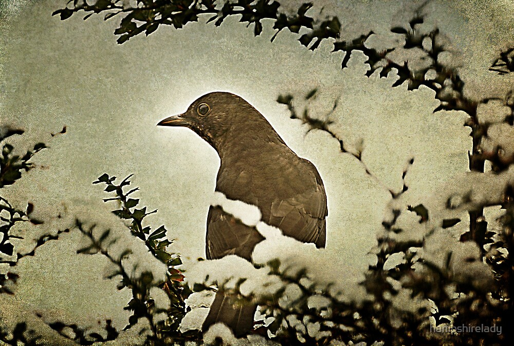 Mrs Blackbird by hampshirelady