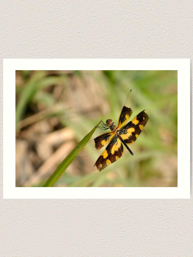 Alternate view of Dragonfly Art Print