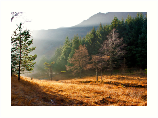 Mist in the Woods by Trevor Kersley