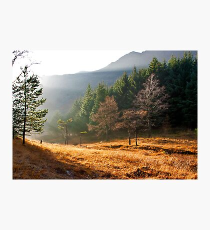 Mist in the Woods Photographic Print