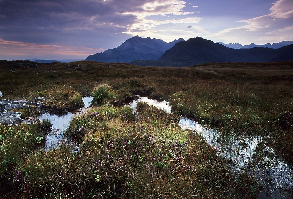 Mountains, Marshes, Heather, Scotland! by TomWK
