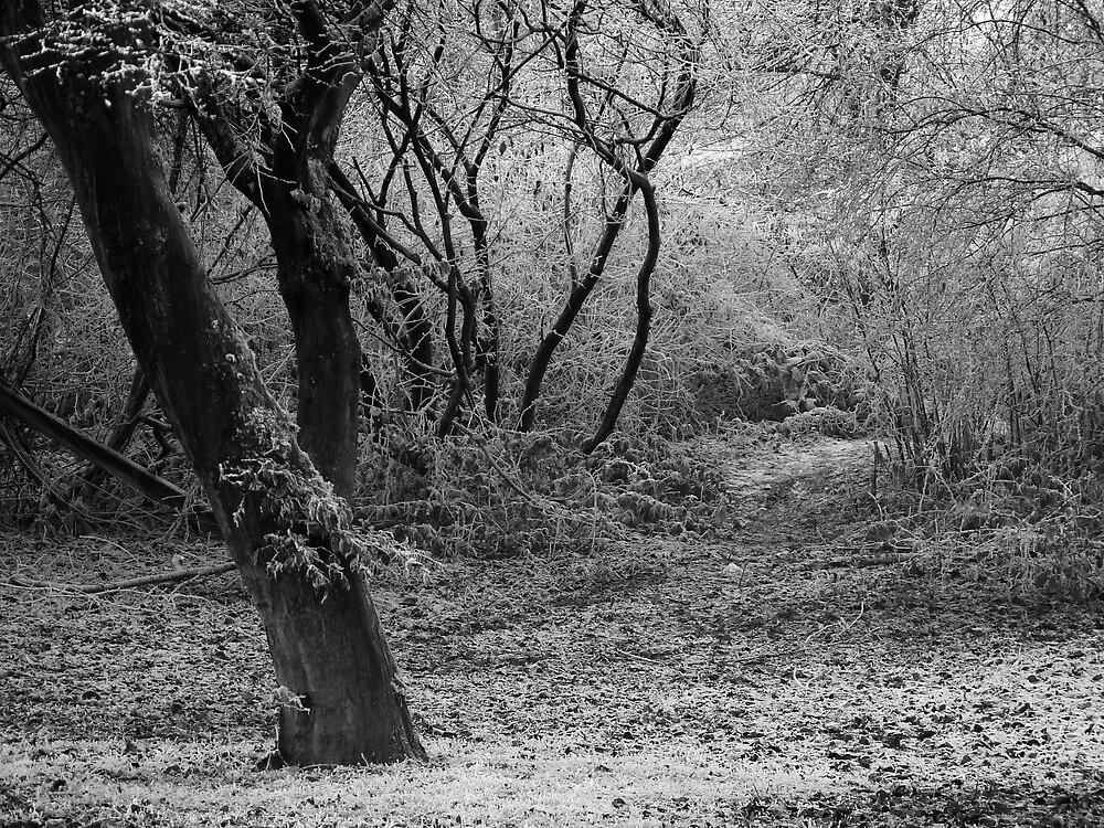 The Path by David Chadderton