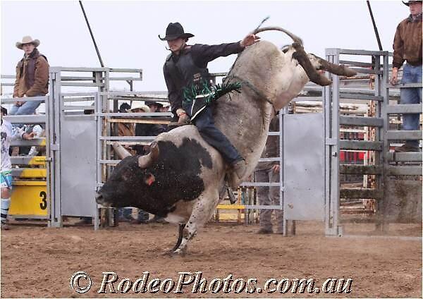 09 bulls by eddyc