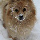 Snow Grace by Evette Lisle