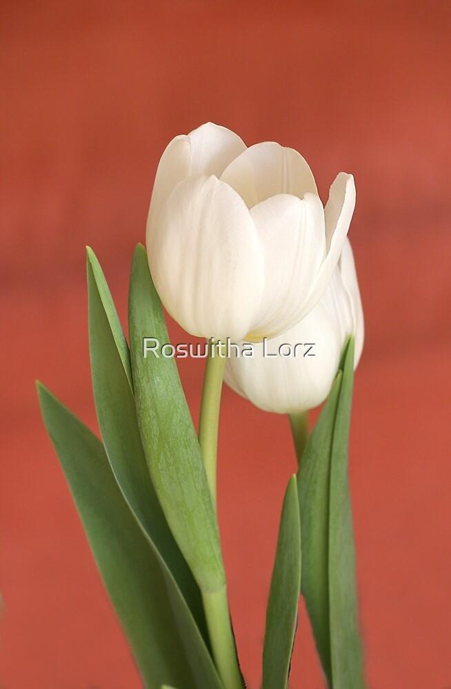 Tulips white by RosiLorz