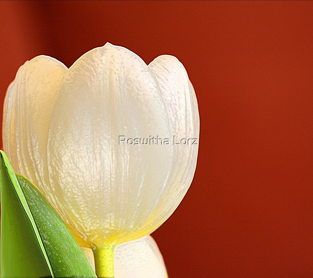 WhiteTulip by RosiLorz
