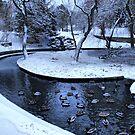 Frozen Ducks by Sandra Cockayne