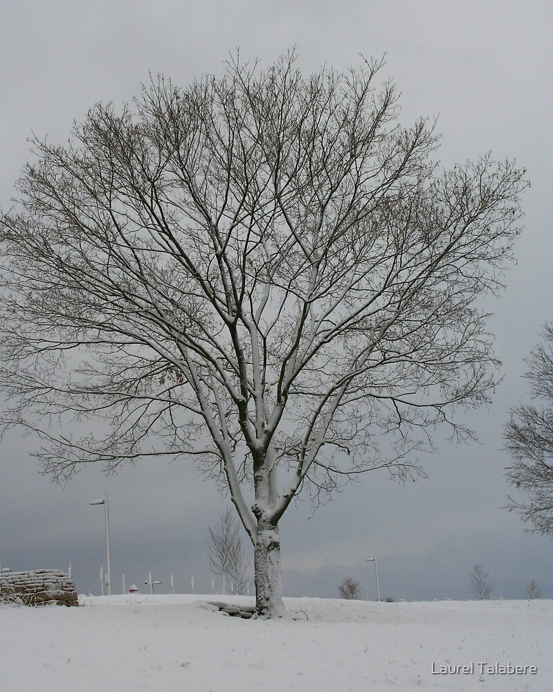 Winter Tree by Laurel Talabere