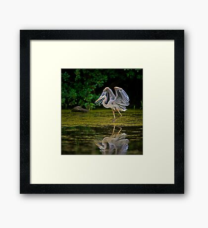 Just stretching my wings Framed Print