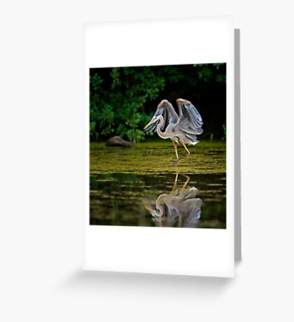 Just stretching my wings Greeting Card