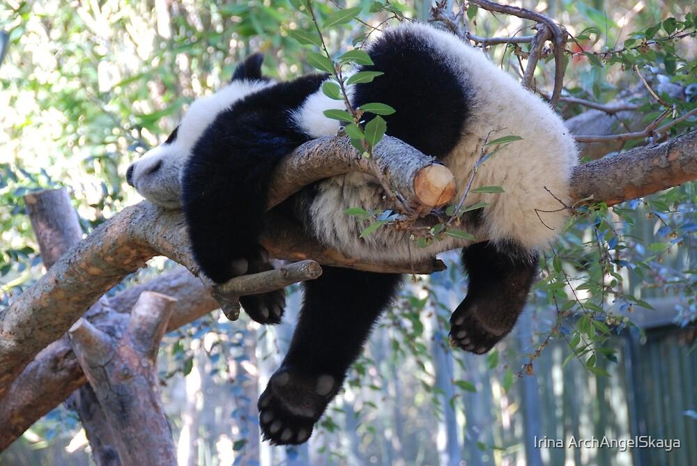 Sweet Baby Panda's Dreams by Irina ArchAngelSkaya