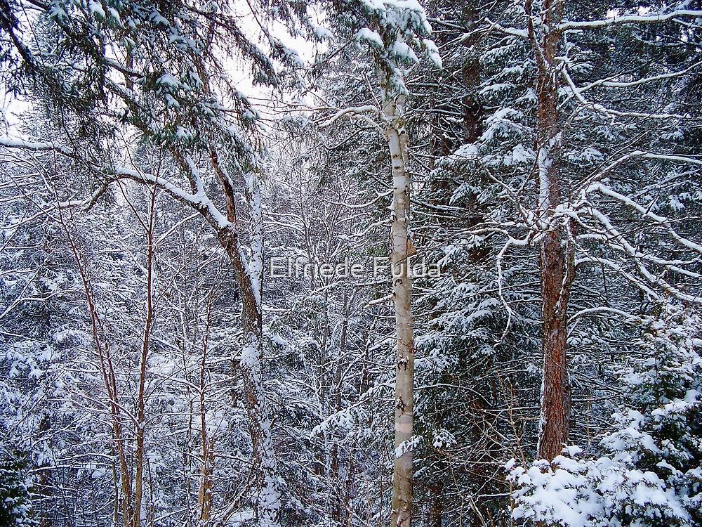 """Winter's Face"" by Elfriede Fulda"