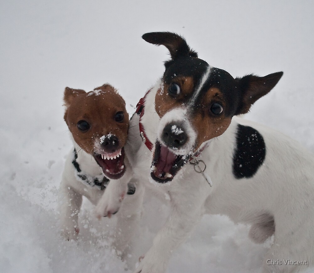 Romping in the snow by Chris Vincent
