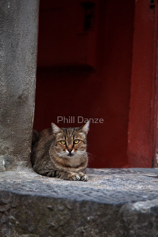 Alley Cat by Phill Danze