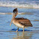 Pelican Wade by Deborah  Benoit