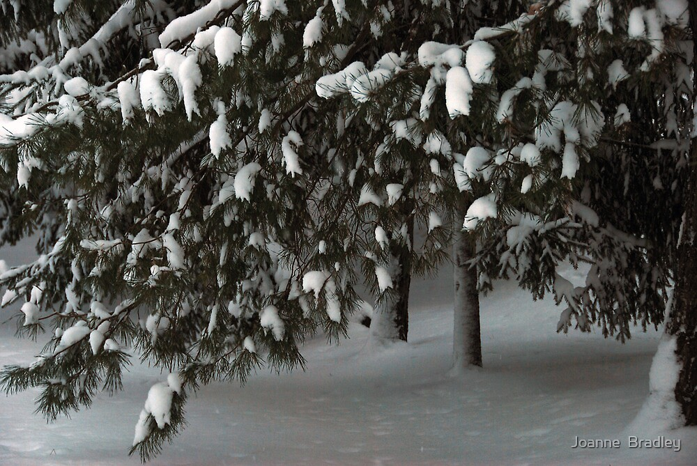 First Snowfall by Joanne  Bradley