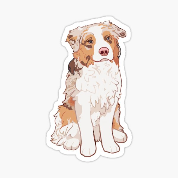 Red Merle Australian Shepherd - Aussie Kiba  Sticker