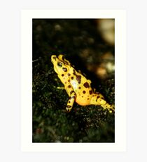 Panamanian Frog at Lowry Park Zoo Art Print
