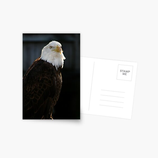 Majestic Freedom II Postcard