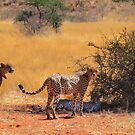 Brotherly love by Explorations Africa Dan MacKenzie