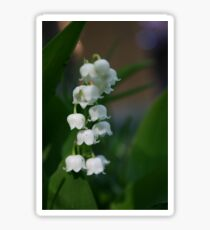 Lily of the Valley Sticker