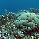 Binusa Point I by Reef Ecoimages