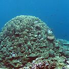 Binusa Point V by Reef Ecoimages