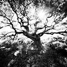 Tree Line 1 by SteveOnTheRun
