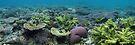 Refuge Island by Reef Ecoimages