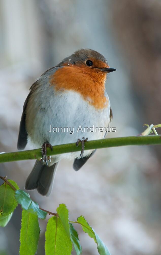 Robin 2 by Jonny Andrews