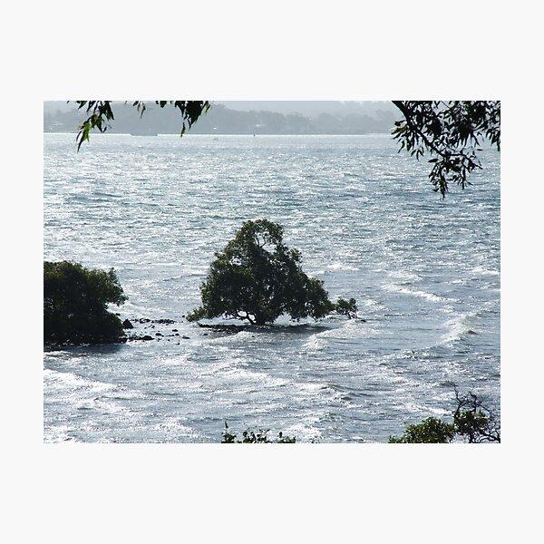 Ice Blue Mangrove-Moreton Bay  Qld Photographic Print