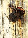 Rusty padlock & peeling paint by David Carton