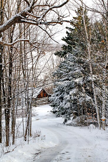 Road to the Cabin, Dunrobin Ontario by Debbie Pinard