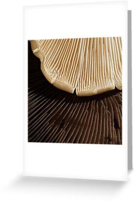 Chocolate or Vanilla?  Choose! by Marilyn Cornwell