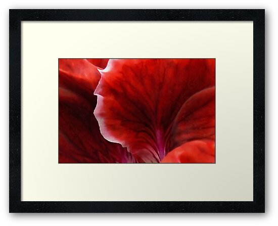 Geranium Red Abstract by paintingsheep