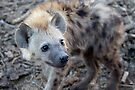 Young Hyena by Michael  Moss