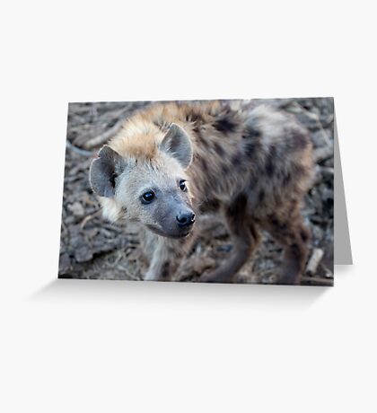 Young Hyena Greeting Card