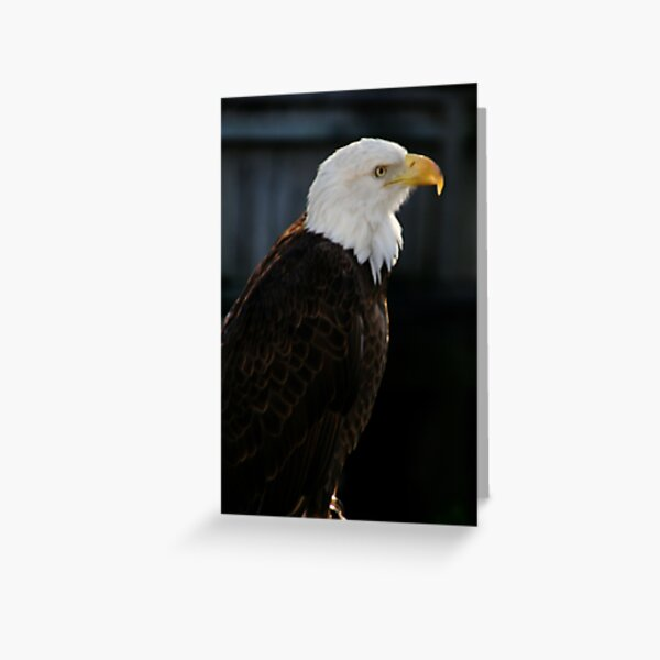 Majestic Freedom IV Greeting Card
