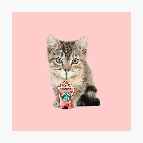 Sweet cat by Alice Monber Photographic Print